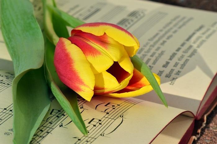 和名は鬱金香(うこんこう)といい、もともとはあまり香りの良い花ではありませんでしたが、最近は品種改良により良い香りのものも増えています。
