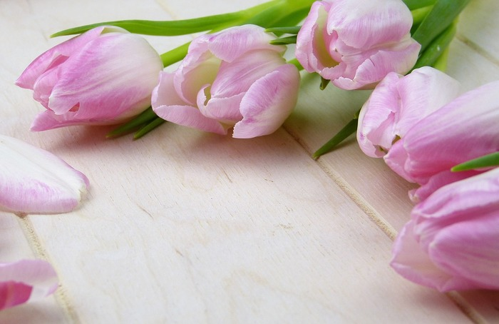 チューリップはお水をとてもよく吸うお花なので、浅水にしていて、気づいたらお水がなくなっていたということのないよう、こまめにお水を換えてあげましょう。