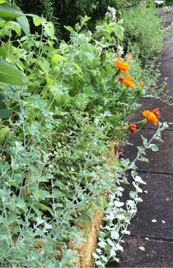 現代では庭園のような広大な土地をもつガーデンではなく、自宅の小さな庭を英国式庭園のスタイルに基づいてレイアウトする方式が親しまれています。バラをあしらったり、ハーブを多く取り入れるスタイルは特に人気があるようです。  小道をレンガ、小石や木材チップでカバーしたり、ジョウロや車輪など農家風アクセサリーを設置すると、よりナチュラルコテージガーデンの雰囲気が演出できますね。