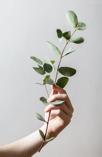 そんな時は基本となる幹のプランを変更します。それに付随する枝葉の部分は、幹がしっかりしてさえいれば流れに沿った選択をすることが可能です。