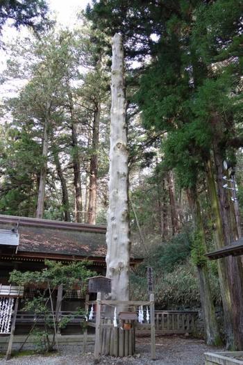 こちらは7年に一度、諏訪地方をあげての一大イベントとなる「御柱祭(おんばしらさい)」で曳建てられた御柱です。御柱は各宮にそれぞれ4本ずつあり、四宮すべてで計16本あります。 御柱となるのは、樹齢150年を超えるモミの木の巨木のみ。ぜひ各宮で御柱を見つけて、その神秘的な雰囲気を感じてみてください。