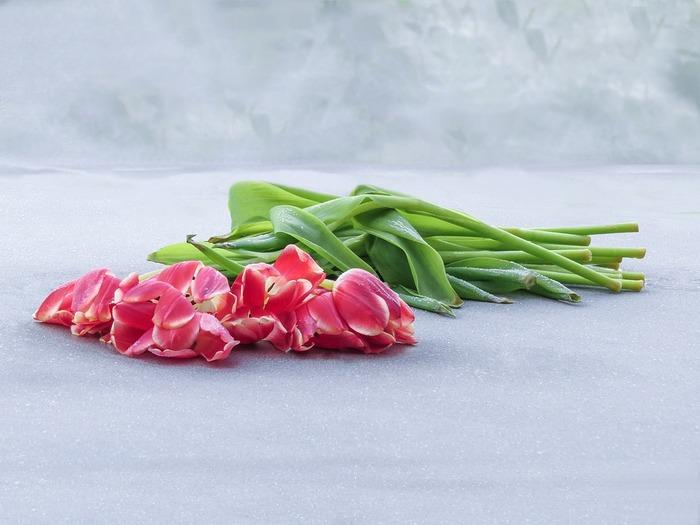 お花の元気がないように感じられたら、新聞紙にそっとくるんで水揚げしてあげましょう。涼しい場所で一晩、過ごすと元気になります。
