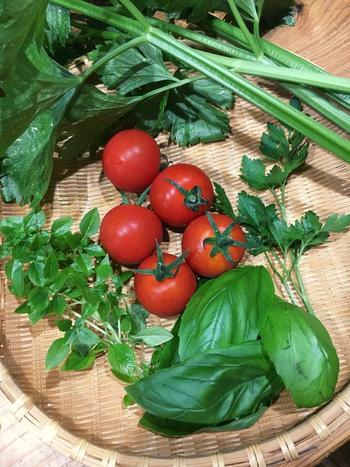 どんなに大切に育てても、虫がついてしまうとそれまでの苦労が台無しに…。家庭菜園といえども、虫除け対策はしっかりと行うようにしましょう。
