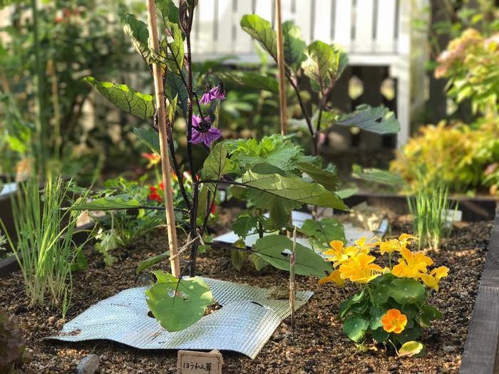 野菜と一緒に黄色や赤のお花を植えることで、見た目にも鮮やかなベジタブルガーデン。ナスのお花の紫色も見事に調和しています。計算されたバランスの良いガーデンに♪