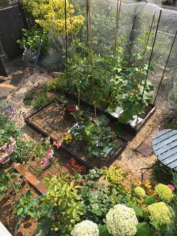 難しいことはありません。お庭の小さな空間やプランターがあれば大丈夫!誰でもおうちで簡単に始められる『ベジタブルガーデン』をご紹介します。