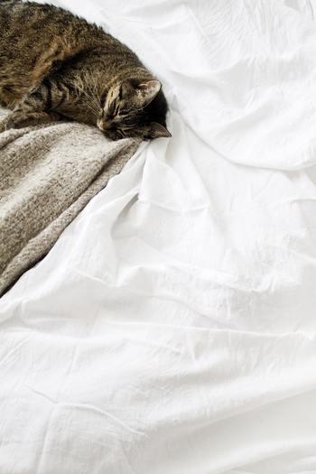 天気の良い日はこまめに布団を干し、ベッド周りもしっかり風を通し乾燥させ、カビを生やさないよう気をつけましょう。  除湿シートを挟んだり、エアコンで湿度調整するのも◎ 窓は面倒でも毎朝拭き取り結露を残さないようにします。 窓辺に吸水性の良いモップを用意しておくと便利ですよ。