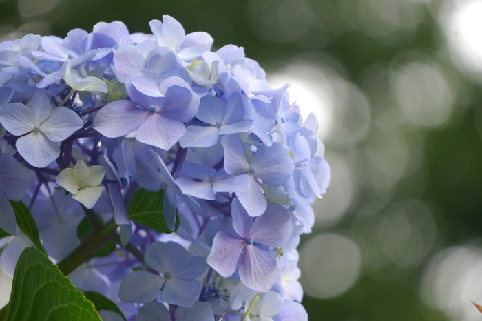 桜の季節が過ぎ去ってしばらくすると、今度は紫陽花の美しさが楽しめます。四季を通して花や草木の美しさを見ることのできる癒しスポットです。
