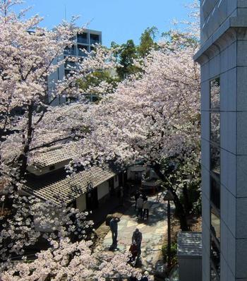 桜の季節のお散歩にもおすすめです。