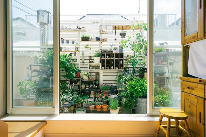 限られたスペースのベランダは場所によって日の入り方が違う場合が多いですね。なるべく植物にたくさん光を当てるのなら、小さい植物は台の上に置くなどして高さを出しましょう。高さを利用した配置方法だと、たくさんの植物が重なり合うことなく、キレイに見せられますよ。