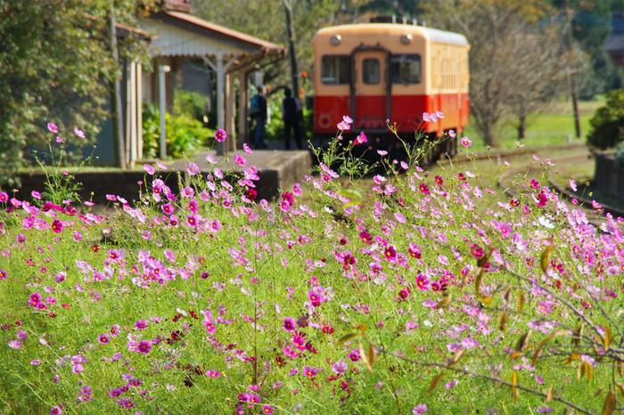 コスモスの季節も素敵です。四季折々の草花を楽しめるのも魅力です。