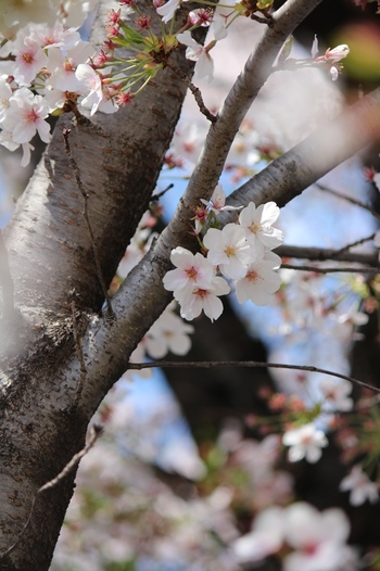 春は、なんだか心がウキウキしてどこかに出掛けたくなりますね。東京からも大阪や京都からもアクセスが便利な名古屋は、日帰りや1泊で出掛けやすく、「どこかに行きたい!」思い立ってすぐに行ける便利な場所です。