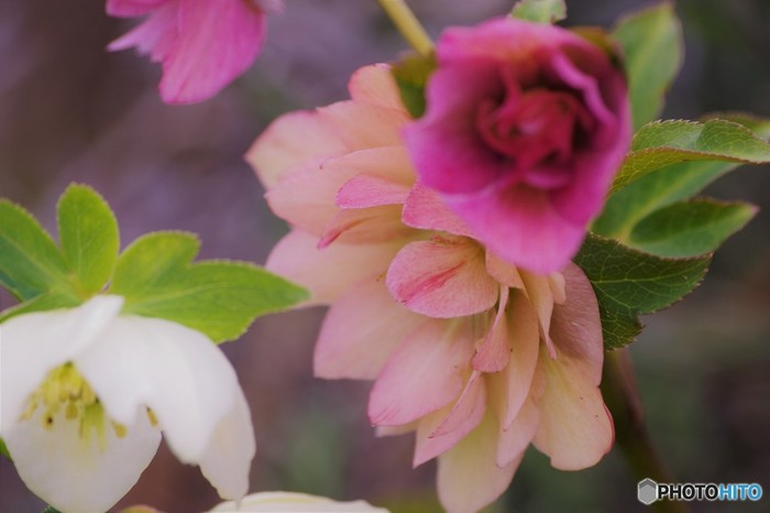 贈りたい、贈られたい花言葉を集めました。感謝の気持ちや愛を込めて花を贈るときのヒントにしてください!