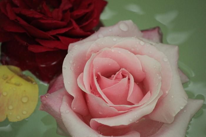 女性のからだや心のバランスを保ってくれるといわれるバラ。お風呂に浮かべて、優雅なひとときを楽しむのも素敵。