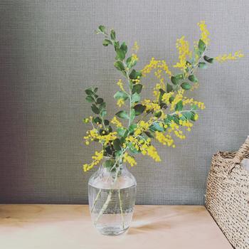 ふわふわとした花が可愛らしいミモザ。シンプルなガラスの花瓶に活けると、より存在感と美しさが際立ちます。鮮やかな黄色いミモザの花を飾るだけで、一気にお部屋が春らしい印象になりますよ。
