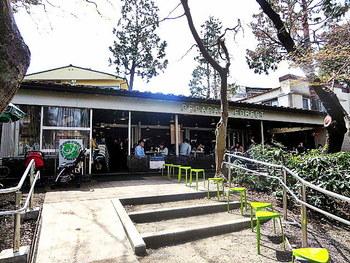 「ペパカフェ・フォレスト」は、井の頭公園を訪れた方なら、一度は目にしたことがあるのではないでしょうか?公園内の橋を渡ってすぐ正面にある開放的な平屋の建物は、週末ともなると行列ができるエスニック料理の人気店なんです。