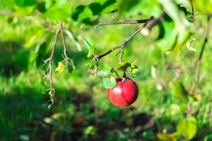 同じ赤色でも「いちごカラー」とは違った落ち着きを持っているのが「りんごカラー」。少し茶色がかったダークな赤色。すっきりと都会的な中にも、あたたかみを感じられるカラーです。