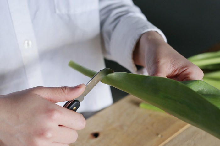 チューリップは、花を包みこむような大きくて瑞々しい葉が魅力的。なるべく取らずに残すことをおすすめしますが、変色していたり垂れ下がっていたりと見栄えが悪いものは取り除きましょう。チューリップの葉は下にひっぱると、茎が剥けて傷みの原因になるので、必ず横方向に手でゆっくりとちぎります。