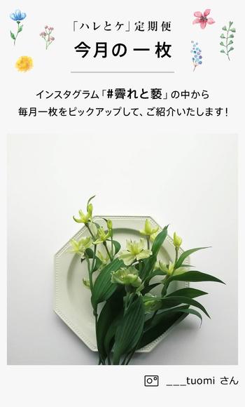 こちらは、先月お届けしたアルストロメリア。ナチュラルな佇まいの花は、こんな風にプレートに乗せて見せるのもおしゃれです。