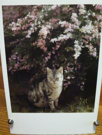 常設絵画は、写実絵画界のリーダー的存在である野田弘志氏や森本草介氏の作品が多数。こちらは、藤原秀一氏の「萩と猫」という作品ですが、写真と見間違うほどのリアルさです。絵でしか現せないディティールも必見です。