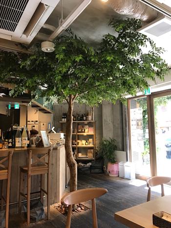 入口の大きなシンボルツリーがナチュラルな空間を演出しています。床材やテーブル、椅子などに木材がふんだんに使われています。