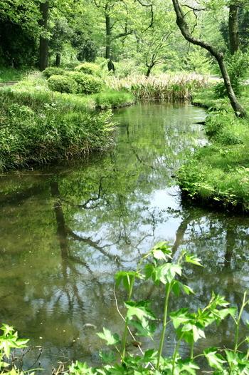 緑を映す水面を眺めるだけで心がなごみます。