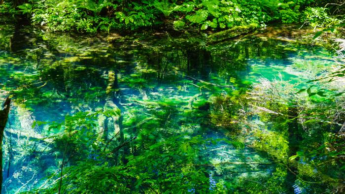 湖底が透けて見える沸壷の池は、湖面積が575平方メートルで、湖沼としては小さい方に該当します。しかし、青く煌めく美しい水面は青池の美しさに匹敵する程で、十二湖の中でも特に人気がある池の一つです。