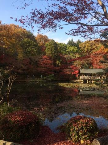 また、紅葉の時期もおすすめなシーズンです。植物園内のにある「日本庭園」や「合掌造りの家」のあたりでは、赤や黄色に染まった葉が池の水面に映り、なんともいえない奥ゆかしさを見せてくれます。カメラを片手に散策をする人が多いです。