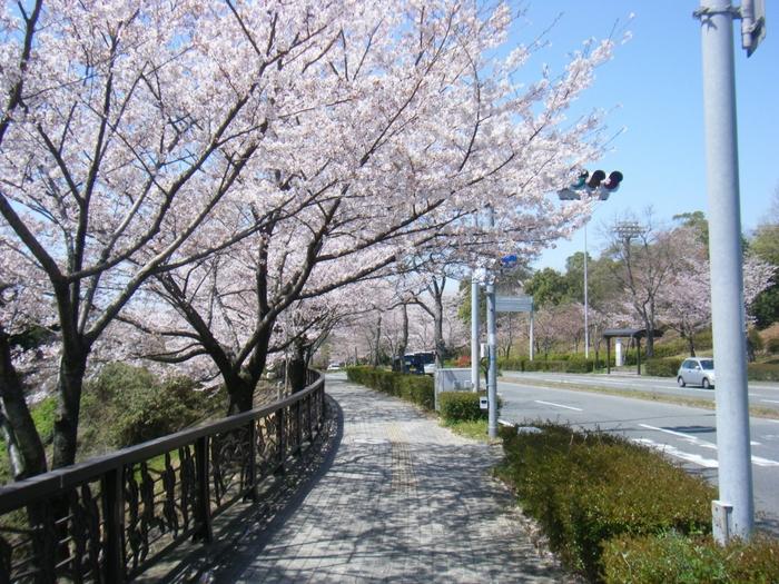 いかがでしたか?昼と夜とではまた違った表情を見ることができるのが桜の魅力ですね。福岡県の桜の名所と周辺のカフェでのんびりとした時間を過ごしてみてくださいね♪