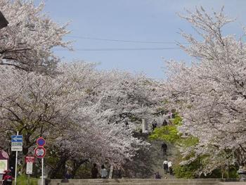 """大濠公園から歩いて10分のところにある「西公園」は、福岡県で唯一""""日本さくら名所100選""""にも選ばれた、舞鶴公園と並ぶ桜の名所です。"""