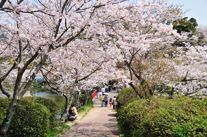 春は、桜を眺めながらゆっくりと散策を楽しみましょう♪夜はライトアップされるため、夜桜も楽しめますよ。