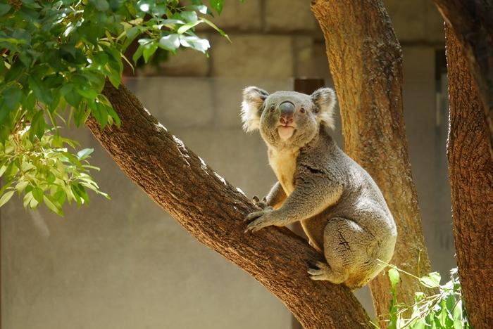 「東山動植物園」は約500種の動物がいる、種類数が日本一の動物園です。可愛らしい動物たちを見ようとたくさんの観光客が訪れます。珍しい植物が見られる植物園もあり、1枚のチケットで動物園と植物園の両方が楽しめてお得です。