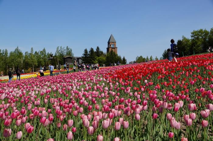 いかがでしたか?5月の北海道は春のお花の見頃を迎え、各地の花畑で絶景を堪能できます。お花好きのお母さんも、その景色とあなたの心遣いにきっと感動してくれることでしょう。北海道を思う存分楽しむためにも、旅行中の服装や持ち物をあらかじめ準備しておき、当日は母娘の2人旅を満喫して下さいね。
