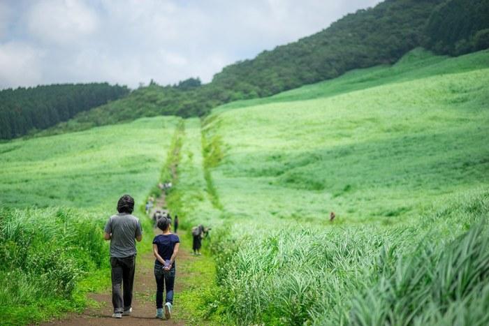 「仙石原」は、金時山の南麓に広がる高原地帯です。  【「仙石原すすき草原」は、箱根のなだらかな山並みを背景にススキが一面に広がる大草原。一般的に秋が見頃だが、初夏から夏の青々とした草原や枯れすすき、雪景色も味わいがあり、季節問わず楽しめる。】