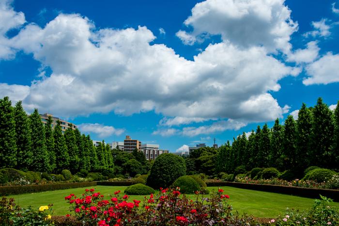高遠藩主の屋敷跡を、明治時代に皇室の庭園として造成し、戦後に一般公開された新宿御苑。約58万㎡もの広大な庭園は、日本庭園、フランス式庭園、イギリス式庭園など、異なる様式の庭園を見事に配しています。敷地内には、桜だけでも65種類・約1300本も植えられており、四季を通して様々な植物が楽しめます。広々とした芝生で、緑越しに見える都心の景色を眺めながら、ゆったりくつろぐことができます。