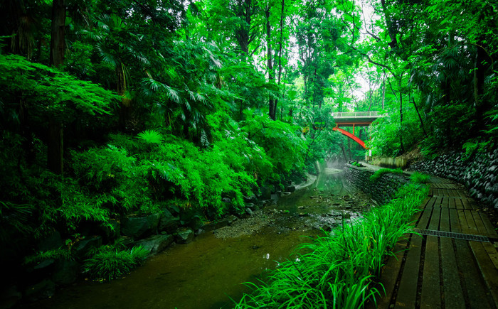 閑静な住宅地が広がる世田谷の一角にある、渓谷を利用した公園。全長約1km程の川沿いに広がる緑地では、ここは本当に世田谷?と思うほどに、豊かな自然が体感できます。東京23区唯一の渓谷であり、周囲の景色が完全に見えないため、まるで深い森に迷い込んだかのような気分に。川のせせらぎを聴きながら散策すれば、季節の移ろいに合わせて姿を変える木々を楽しめますよ。