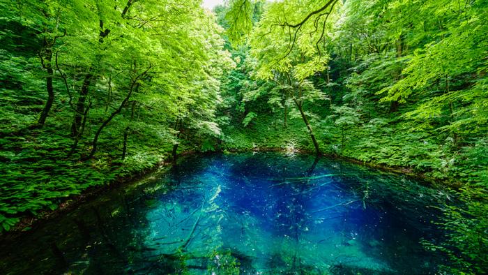 青池の美しさは、傑出しています。深みのある青色と陽射しを浴びて淡く煌めく碧色が入り混じった青池の水面は、深山幽谷とした雰囲気が漂っており、心を奪われずにはいられない不思議な魅力を放っています。