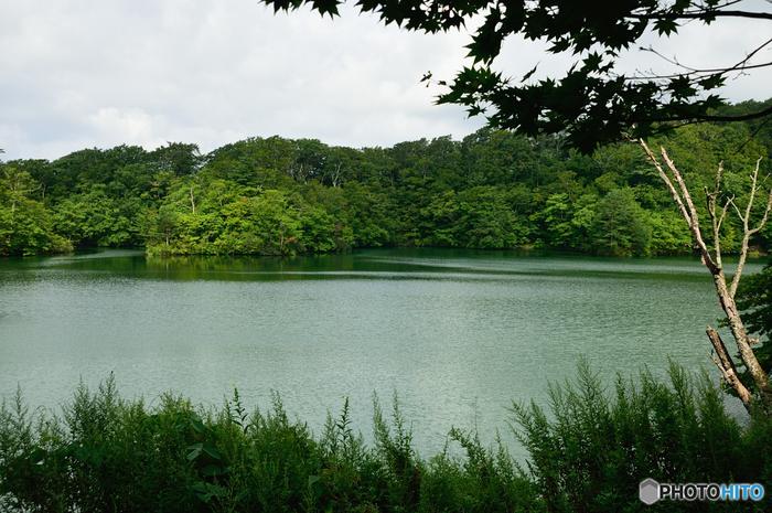 開けた眺望を持つ王池は、33以上もの湖沼を形成している十二湖の中でも屈指の大きさを誇り、その表面積は53500平方メートルに及びます。