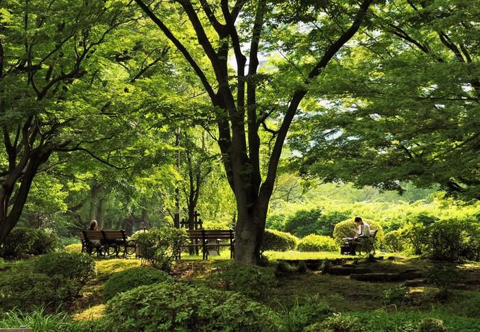 再開発が進み、今最も話題のスポットともいえる日比谷のランドマーク的な公園。江戸時代には大大名の上屋敷が置かれていた場所で、明治時代には日本で初めて一から整備された公園として造成されました。約16万㎡の敷地内には豊かな木々が立ち並び、野外音楽堂や改装中の日比谷公会堂、レストランや結婚式場などの施設が揃っています。ベンチがたくさんあるので、ゆっくり本を読んで過ごすのもおすすめです。