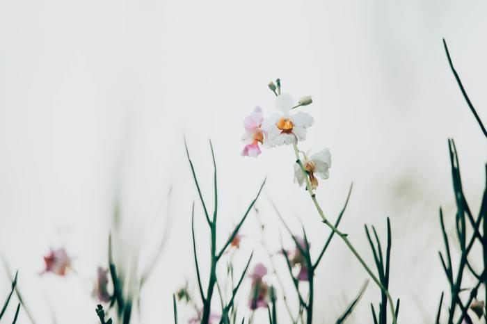 春は新しい生活や仕事が始まる時。懸命にその流れに乗ろうと体と頭を働かせる毎日ですよね。でも、なんとなく落ち着いてきた頃にふと気づくのが過ぎていく時間の速さ。