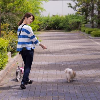 ワンちゃんは特に、このサービスは嬉しいのではないでしょうか?日課である犬の散歩もしてもらえるので、体調不良で散歩に連れて行ってあげられない時にもぜひ利用してみたいですね。