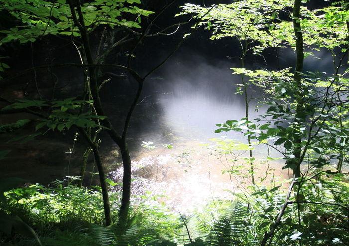 東北地方を代表する景勝地、白神山地は、鹿児島県の屋久島と並んで、日本で初めてユネスコ世界遺産に登録されました。