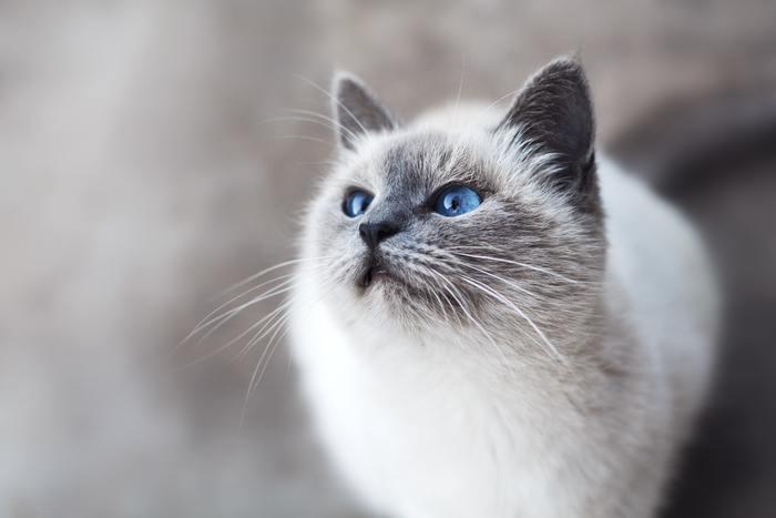 ペットを預けている間に健康診断をしてくれるサービスもある動物病院のペットホテル。いつも行きつけの病院であれば先生の顔も知っているので、ペットにとっても安心ですね。高齢のペットで健康状態が心配という方にもオススメです。