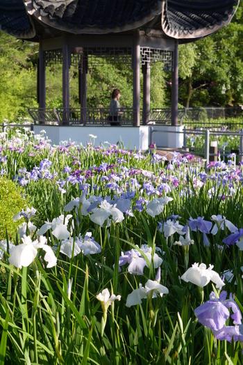 友好都市である中国蘇州市から贈られた「斉芳亭」がある水月公園は、大阪府北部に位置する池田市内の公園です。