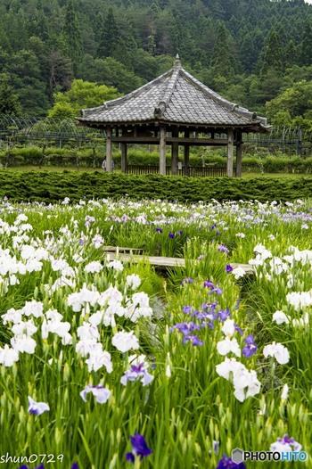 兵庫県三田市にある永沢寺内には、お食事処やボタン・ギボウシなど季節によって咲く花々が植えられた庭園があります。