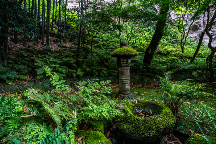 地面や灯篭を覆い隠すほどの苔が情緒を感じさせるお庭です。苔と石のつくる風景はどこかやさしく、見る人の心を静めてくれます。