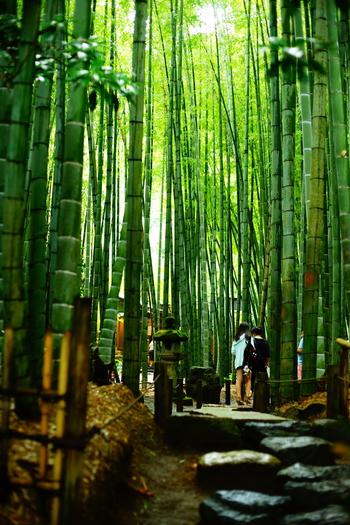 四方を背の高い竹に囲まれた「竹庭」です。竹の隙間から差し込む木漏れ日も綺麗で、凛とした空気の中を歩くことができます。