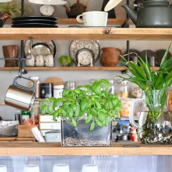 キッチンにハーブを育てれば、料理に使えて目の保養にもなるので一石二鳥です◎こちらは、バジルを100円ショップのコレクションボックスの蓋に植えたものだそう。