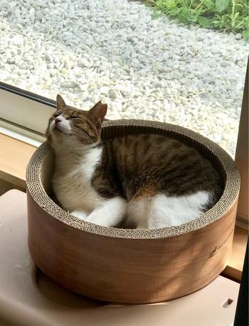 店内には可愛らしいネコが常駐しており、ネコが快適に過ごせるように、本棚などの家具の配置が工夫されています。