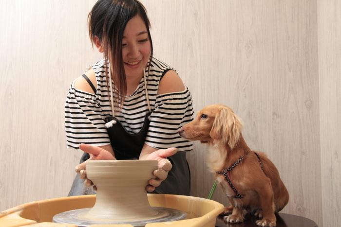 プレートやフードボウルなどを作る陶芸体験ができます。「愛犬の駅」を訪れた思い出に、世界で一つだけの愛犬の肉球入り陶器が作れちゃいますよ♪