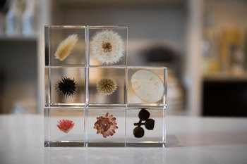 ひとつずつ手作業で、アクリルキューブに封じ込められた乾燥植物たち。ウサギノネドコの「Sola cube」は、狭いスペースにも置ける可愛らしいアイテムです。
